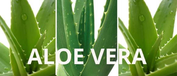 Comment choisir un jus d 39 aloe vera - Acheter une plante aloe vera ...