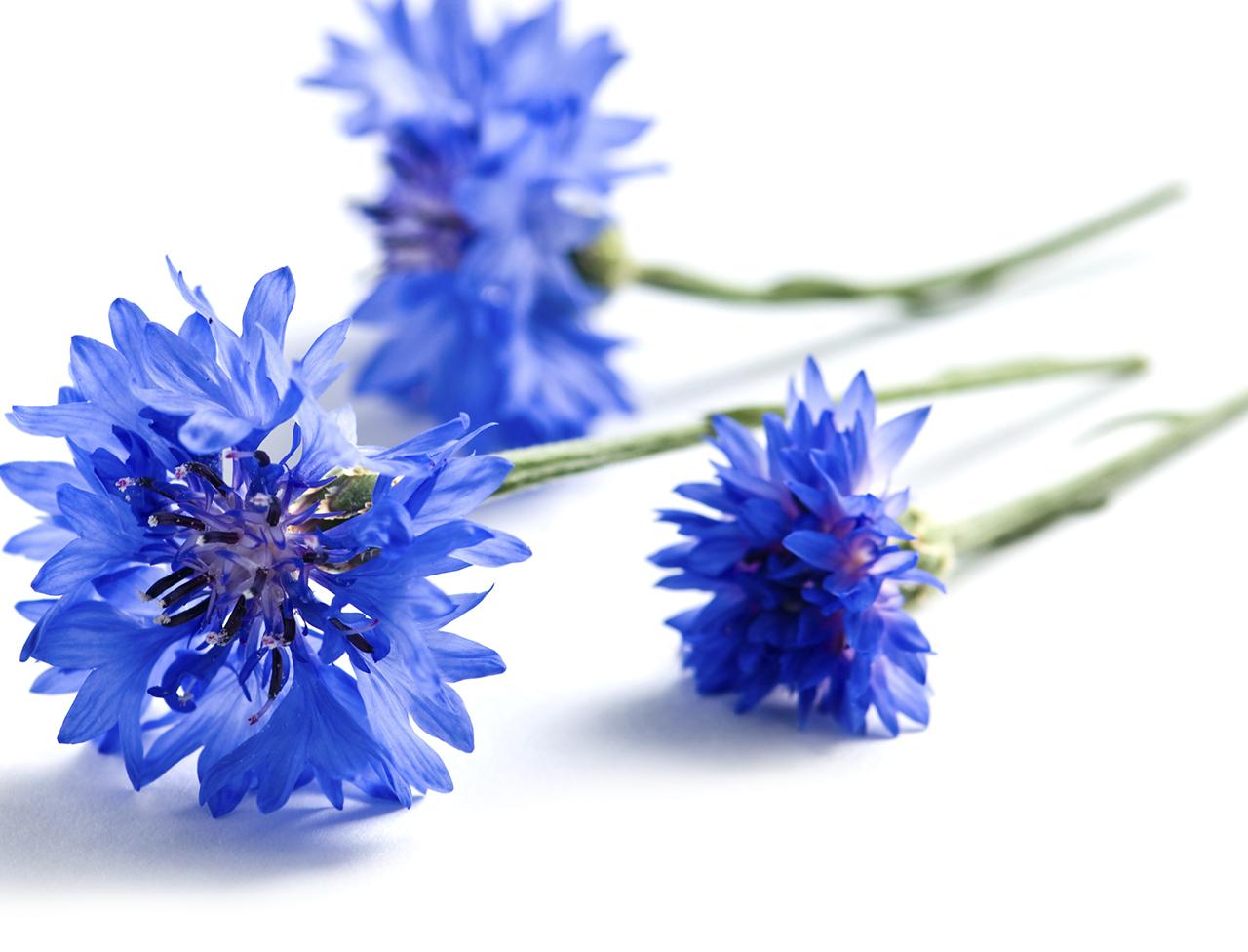 L'eau florale de bleuet