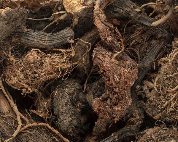 huile essentielle de nard de l'himalaya