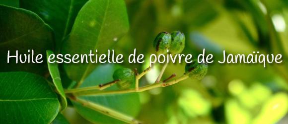 Huile essentielle de poivre de Jamaique - 580 x 250